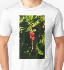 Arabica COFFEE cherry fruits on a Coffee Plantation, Brazil (Photo by ACCI) Unisex T-Shirt