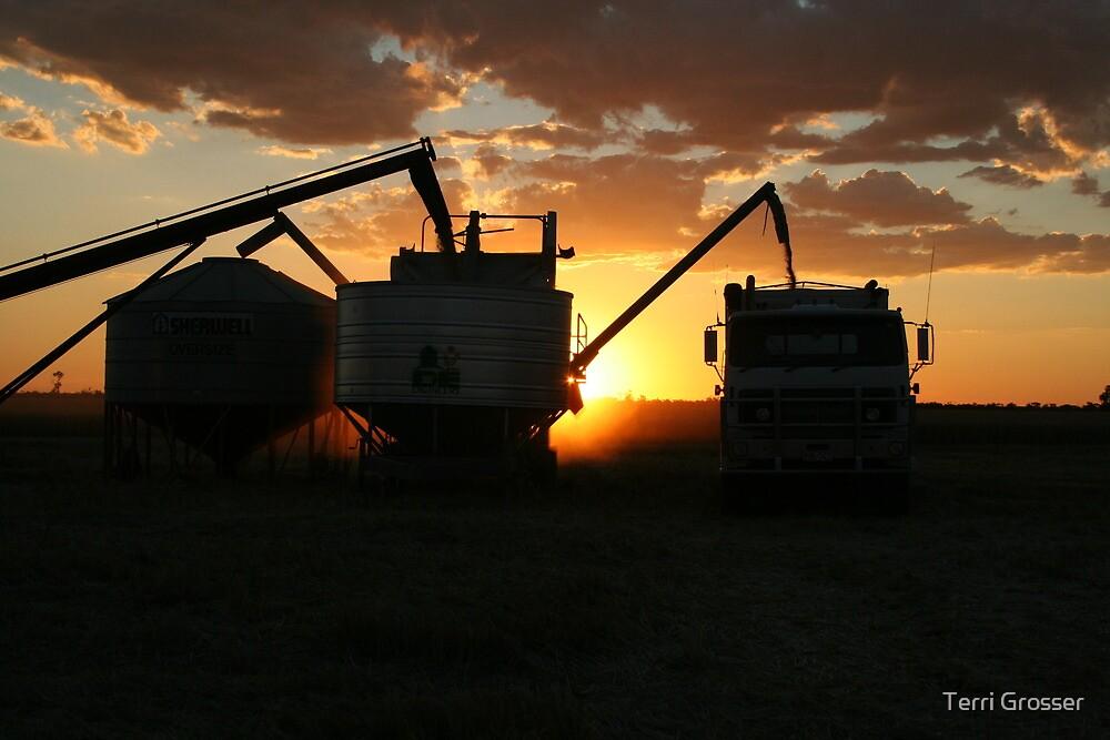 Harvest at Sunset by Terri Grosser