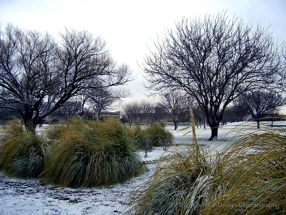 Winter In The Desert by R&PChristianDesign &Photography