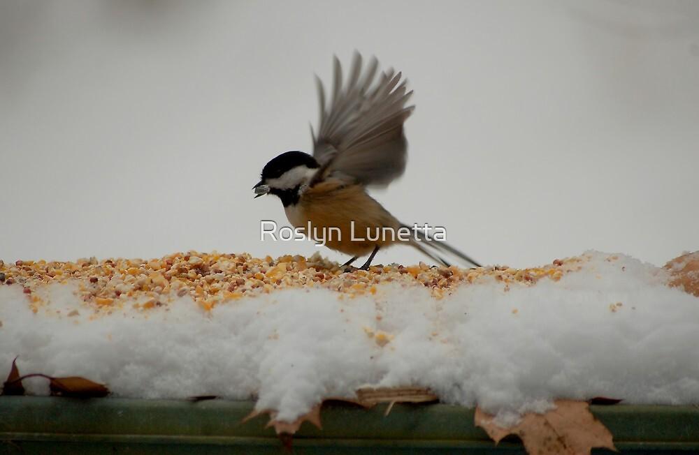 am chick by Roslyn Lunetta
