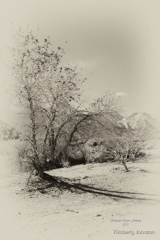 Trees in the Desert by Kimberly Johnson