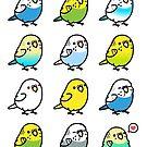 Chubby Budgies by birdhism