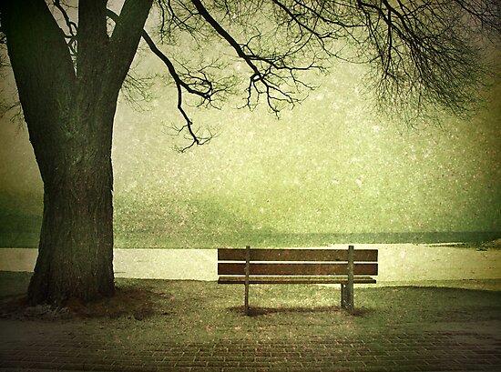 Solitude by Tara  Turner
