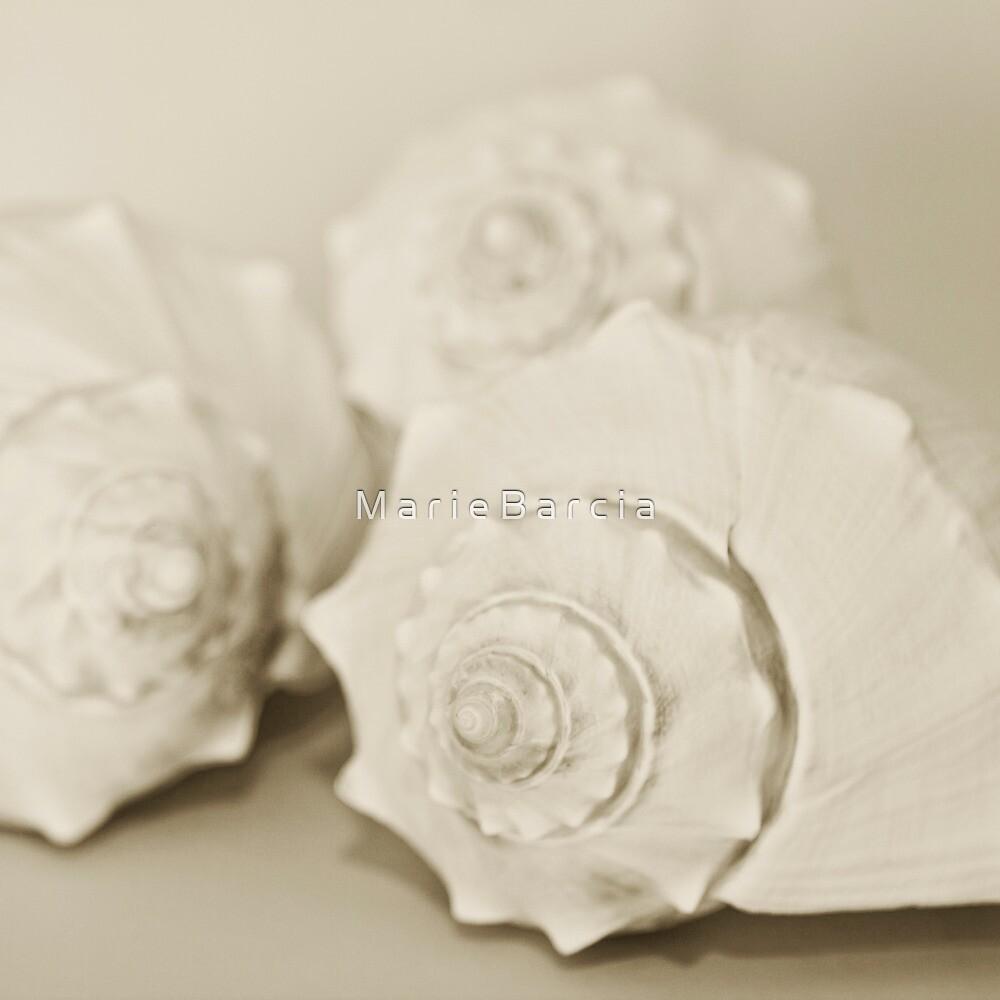 Shells by M a r i e B a r c i a