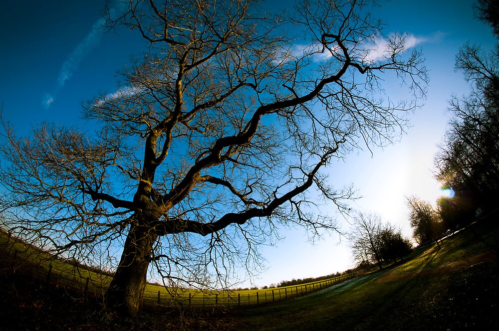 Tree  by peter-langman