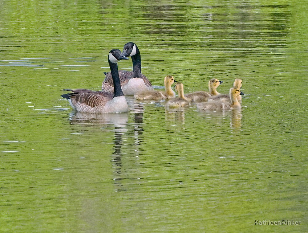 Canadian Goose family by KathleenRinker