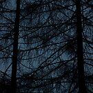 Veil by urskhan