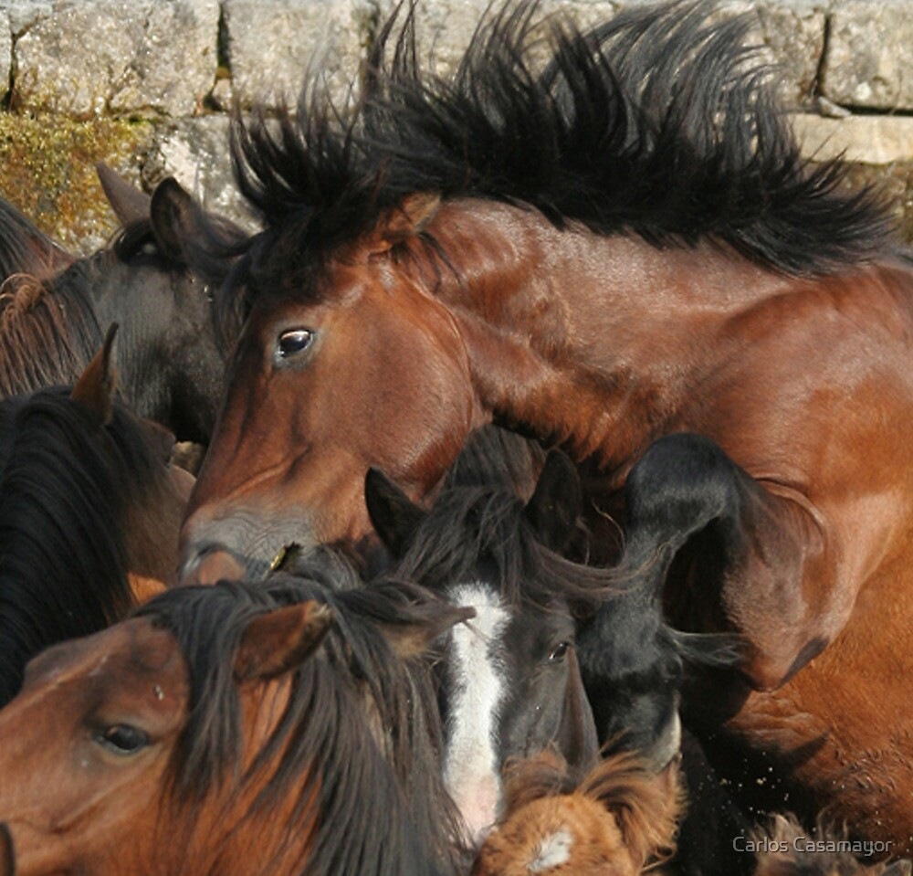 Spaniard Wild Horses 2 by Carlos Casamayor