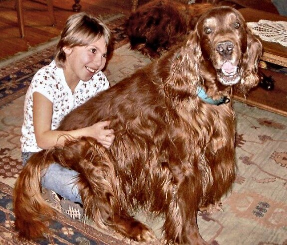 Lap Dog by Barb Miller
