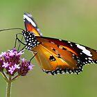 Butterfly feeding Pt 2 by Coriena