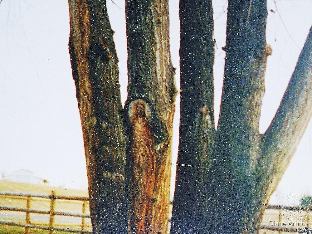 Tree Of Life by Diane Arndt