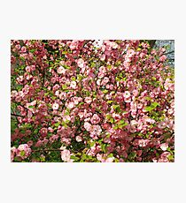Pink flowers background Photographic Print