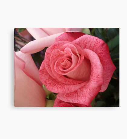 Speckled Rose Canvas Print