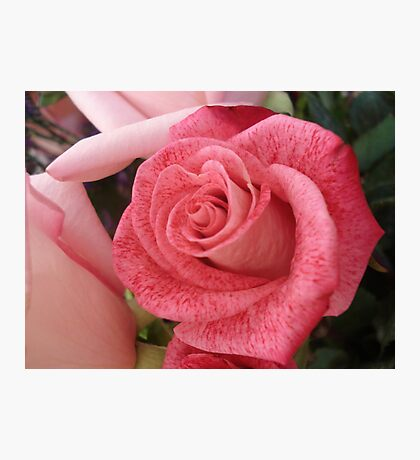 Speckled Rose Photographic Print