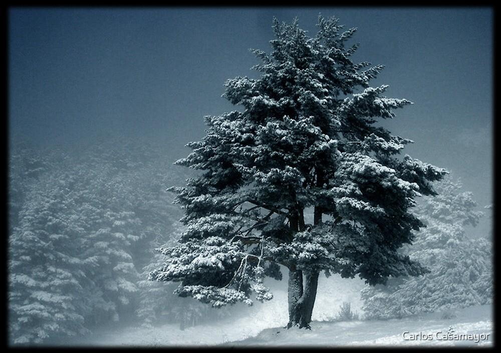The Magic Tree 4 by Carlos Casamayor