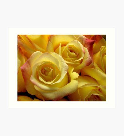 Blushing yellow roses Art Print