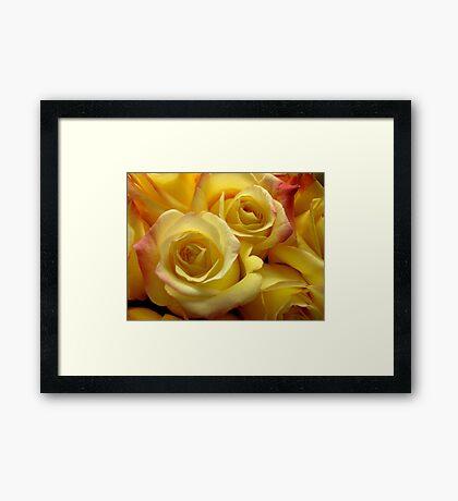 Blushing yellow roses Framed Print