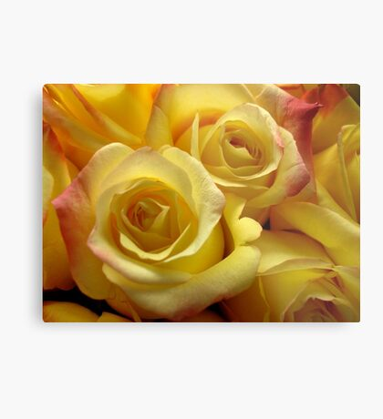 Blushing yellow roses Metal Print