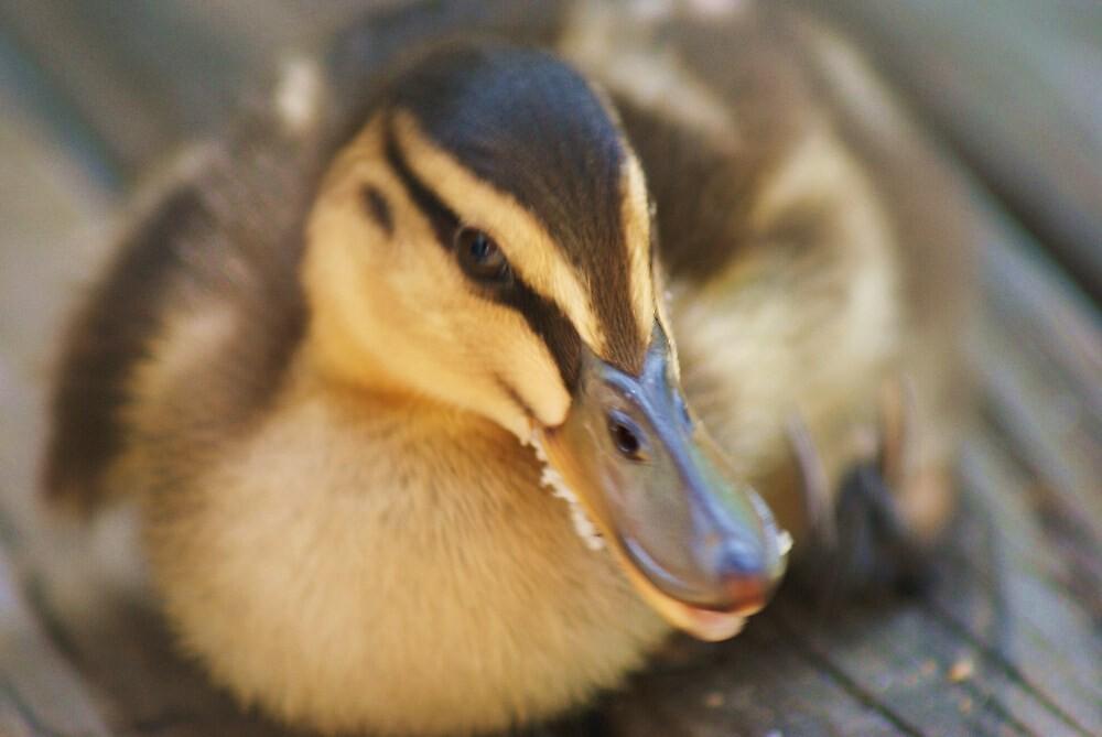 The Duckling by Adam Jones