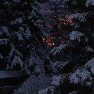 Fire in the Trees by Jackie Muncy