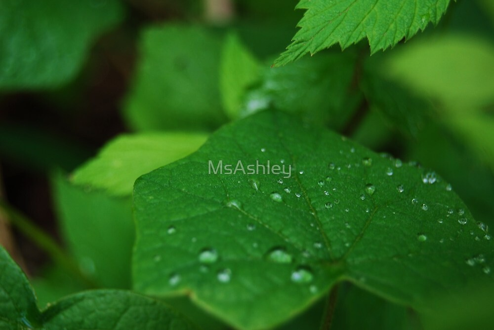 Raindrops Fallen on a Leaf by MsAshley