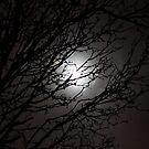 Night Sky by Hunniebee