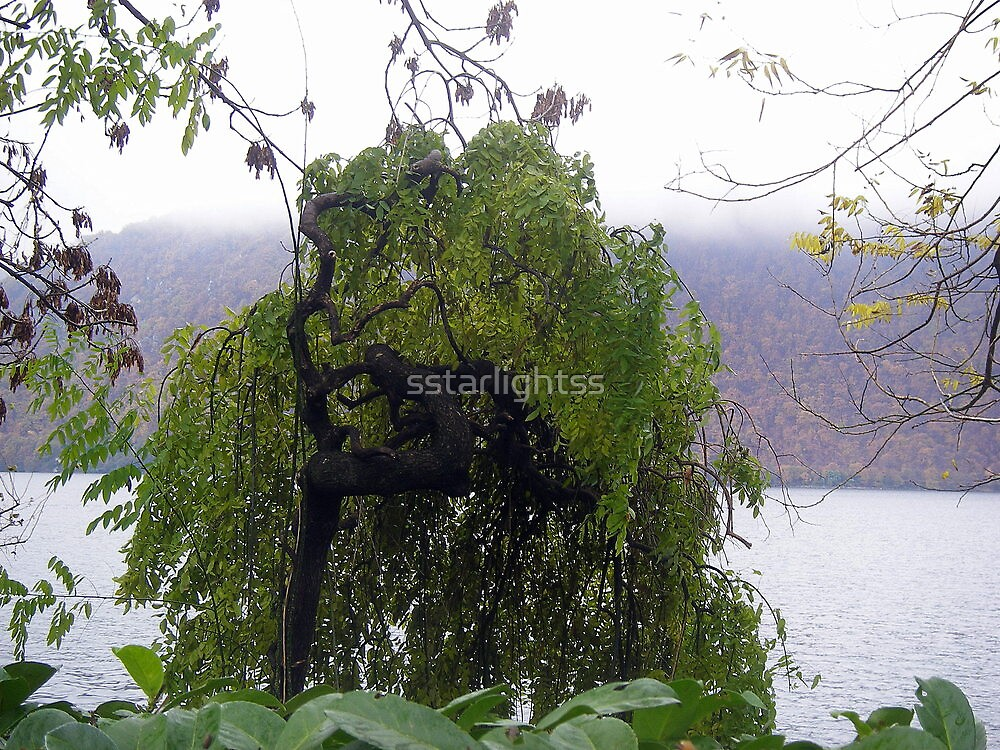 Weeping Willow by sstarlightss