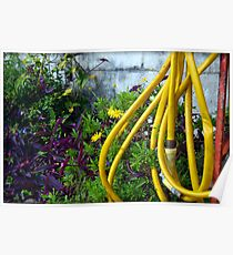 Algiers Front Yard Vibrance Poster