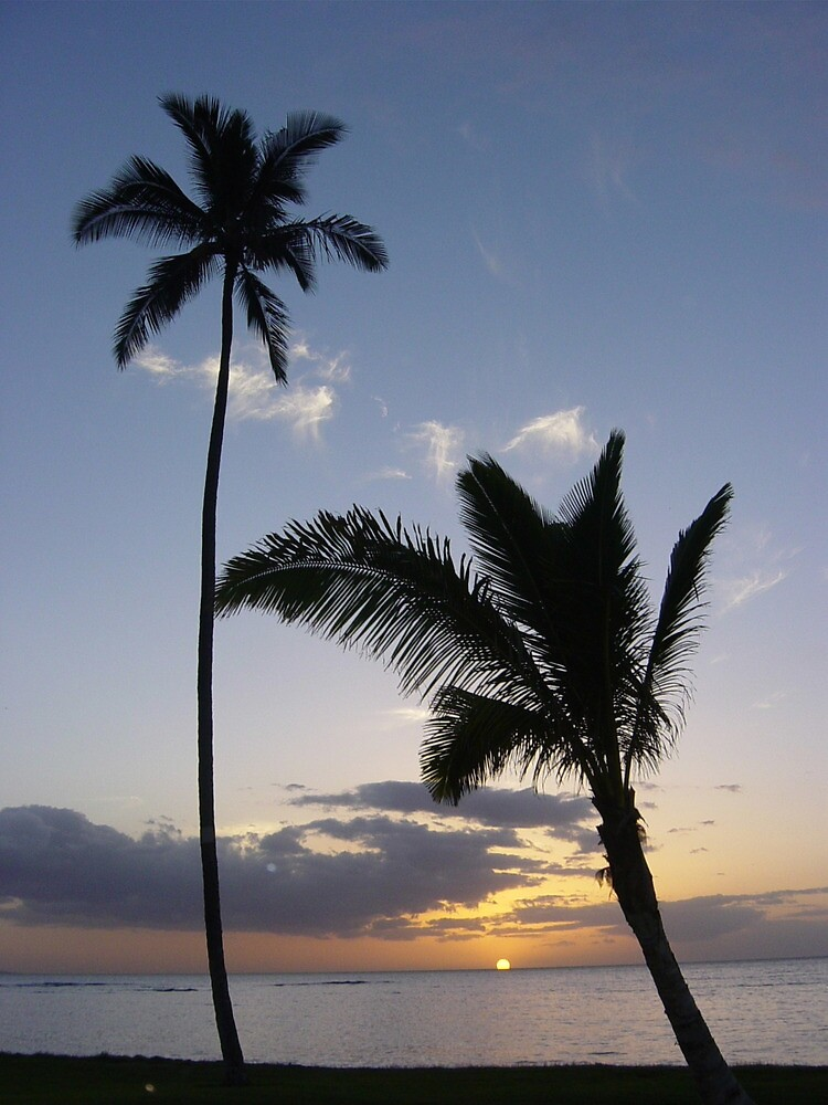 Pair of  Maui coconut trees at Sunset by Picasojo