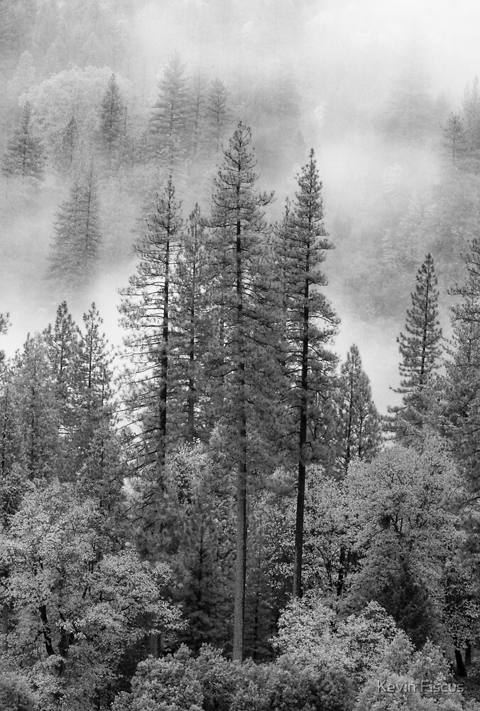 Tahoe National Forrest, Lake Tahoe CA by Kevin Fiscus