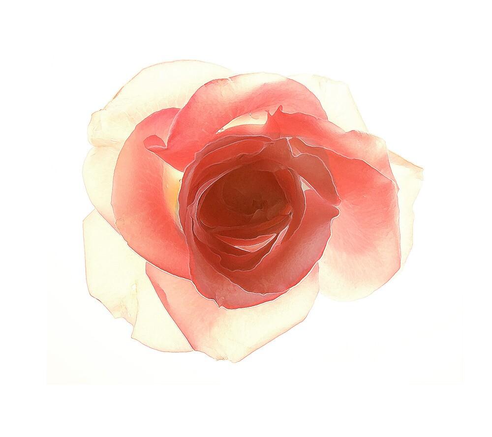 Rose  by alacartemc