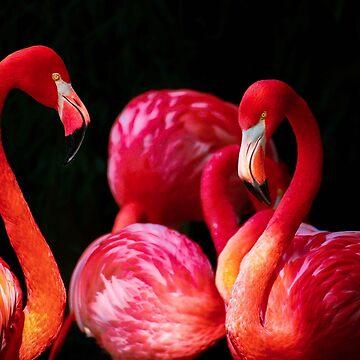 Flamingos by franceslewis