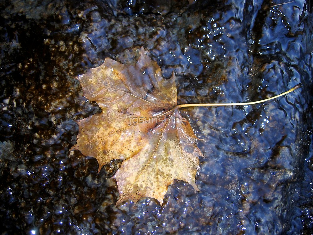 Autumn Maple Leaf on rock with water single by josunshine
