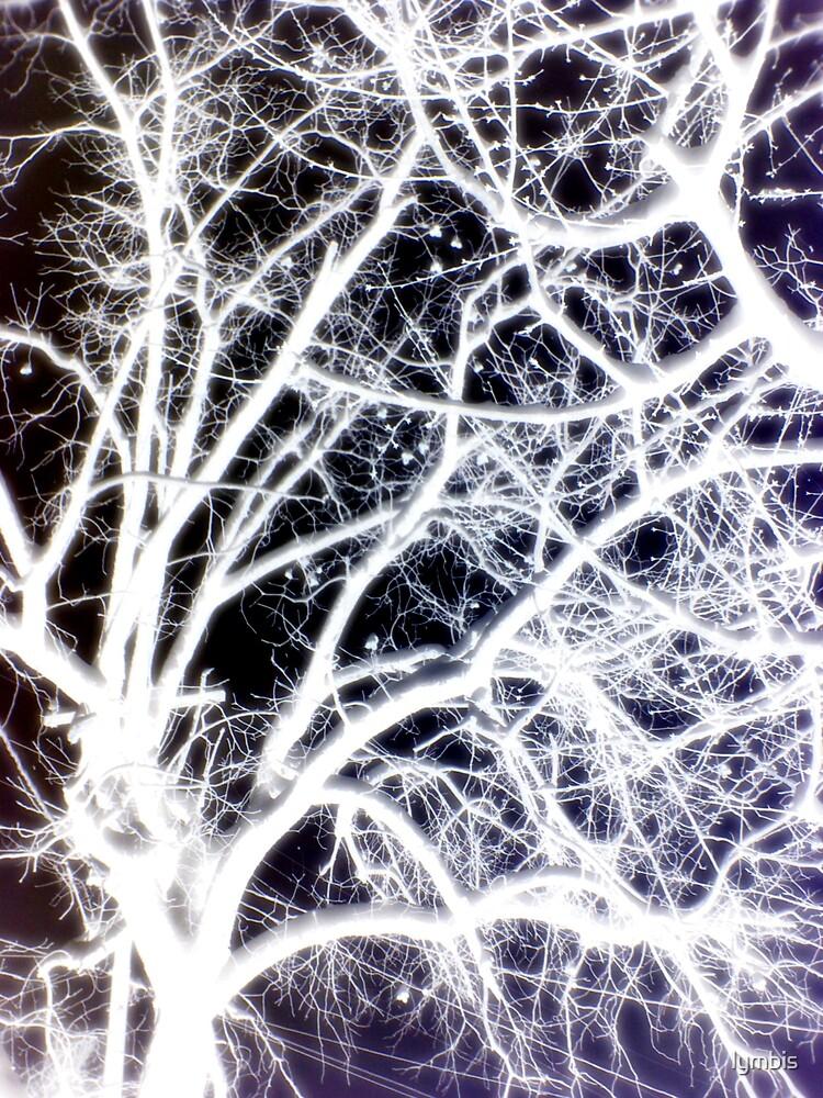 Winter Fireworks by Lynn Stratton