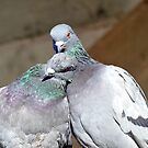 Love Is... Rock Pigeons by AndreaEL
