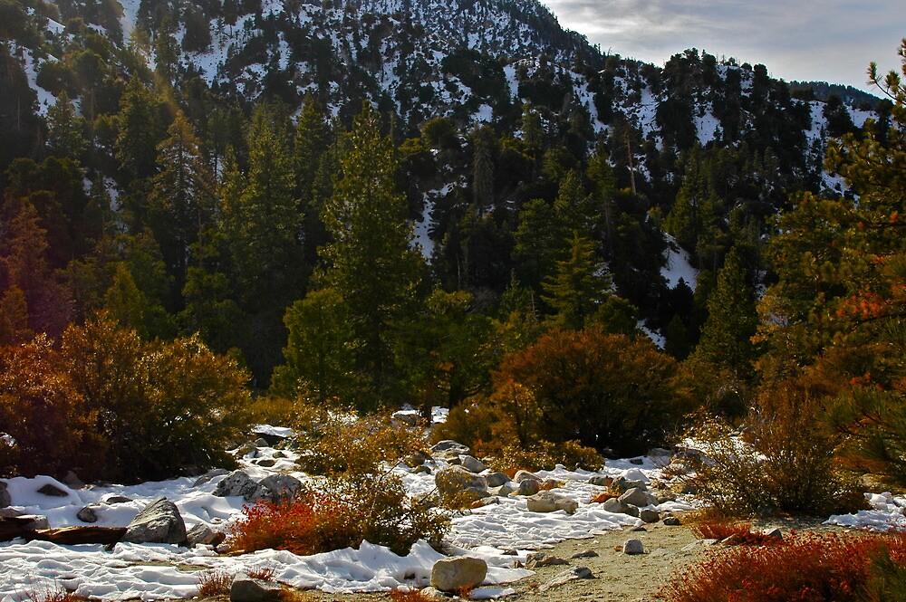 Snowland Landscape by Coramilton