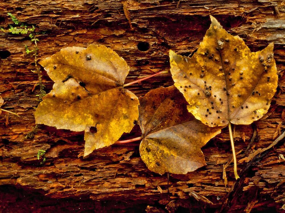 3 leaves by DesertDweller