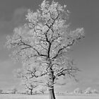 Tree with Hoar Frost in B&W by AnnDixon