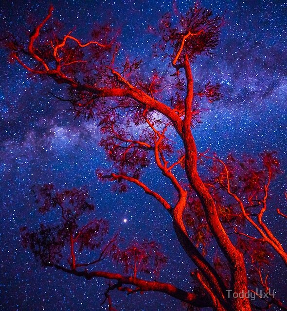 Milky Way, Fitzroy River by Toddy4x4