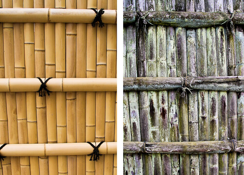 Bamboo by Bill  Russo