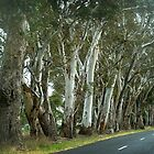 *Trees lining Anakie Road* by EdsMum
