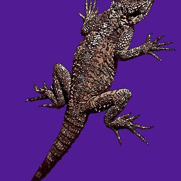Agama Lizard - Cyprus - Purple Background. by AmandaMLucas