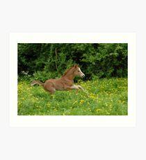 galloping foal! Art Print