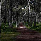 Treeful Trail by Dawn van Doorn