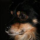 Džiugas - my mother`s dog by Antanas