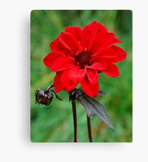 Dahlia Bishop of Llandaff Crimson Red Flower Canvas Print