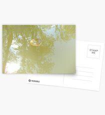 Lillypad Postcards