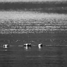 Lake Buoys in Black & White by MBWright88