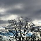 cloudy sky by Maria Vincent
