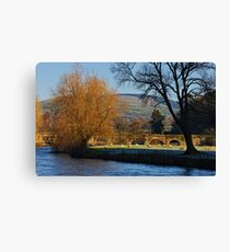 sheep grazing on a frosty morning, Inistioge, County Kilkenny, Ireland Canvas Print